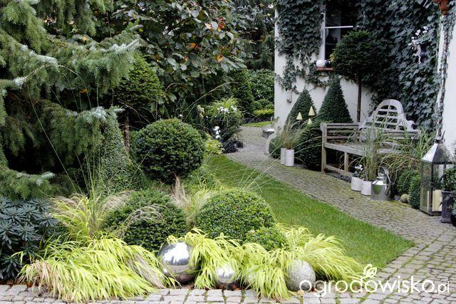 Ogród nie tylko bukszpanowy - część III - strona 167 - Forum ogrodnicze - Ogrodowisko