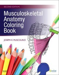 """n.25€ Reinforce your understanding of musculoskeletal anatomy with fun, hands-on review and practice! Ideal for independent anatomy review or as a companion to Muscolino's """"The Muscular System Manual: The Skeletal Muscles of the Human Body"""", this unique study tool provides more detailed coverage of musculoskeletal anatomy than any other coloring book available and helps you develop the working knowledge of muscles you'll need for successful manual therapy practice."""