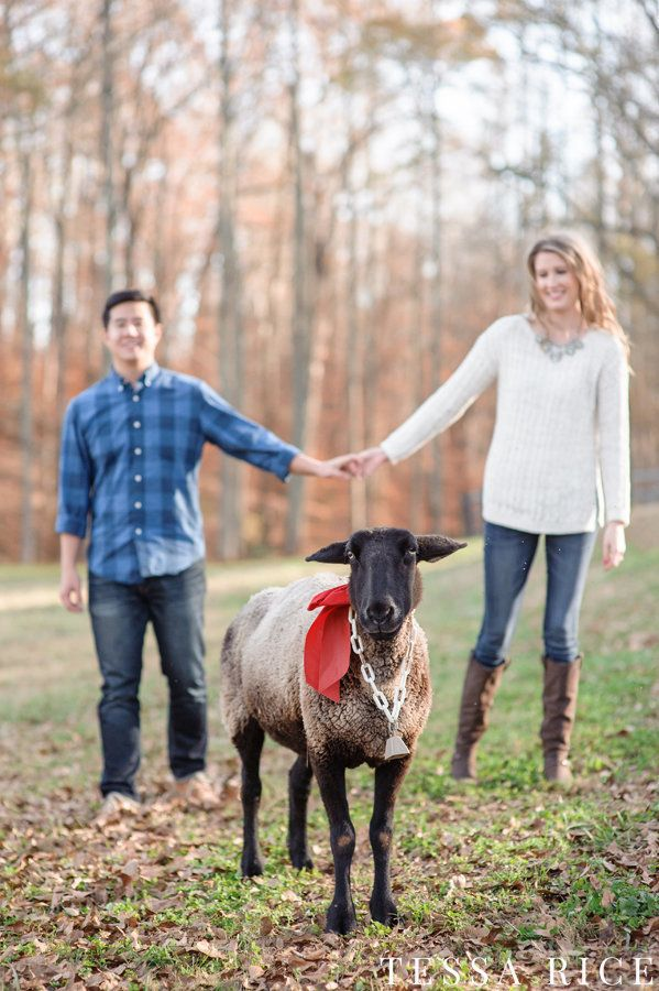 Perfect engagement photo for the couple with a very strong relation-sheep | Tessa Rice Photography