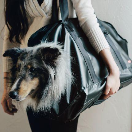 犬/キャリーバッグ/中型犬/シェルティ,シェットランドシープドッグ