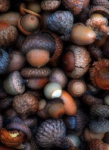 """This has a wooden feel to it. I love the tones of colour! The roughness of the tops of the acorns have an armour feel, and the silkier shells contrast with the other textures"" --quote--"
