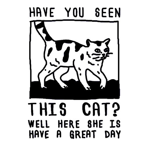 The Best Missing Cat Poster Ideas On Pinterest Aging Humor - Missing cat gets found next to his own missing cat poster