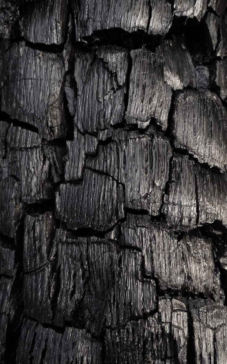 Charred Wood - burnt & blackened tree bark with cracked textures; damaged nature