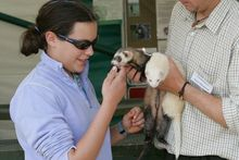 Ferrets, Pugs and Drummers | gamefair.co.uk