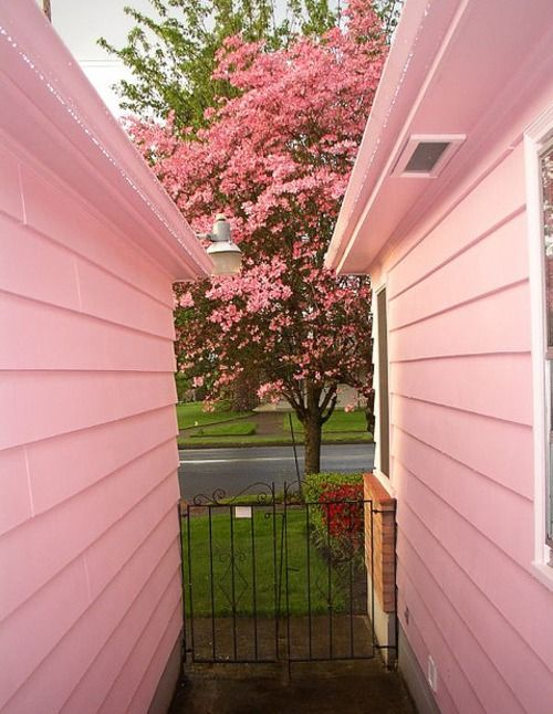 Ahhh pink: Cottages Gardens, Things Pink, Pink Trees, Pink House, Tickle Pink, Pink Things, Pink Wall, Flowers Trees, Cottages Home