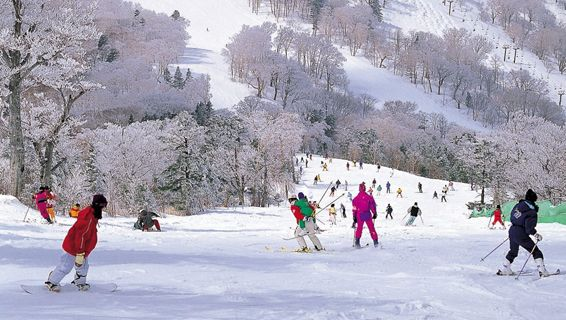 Japan Powder is offering so many holiday packages for ski resorts offering higher-level of services and luxurious accommodation. Ski Japan holidays Package includes all the Accommodation, Transfers, Lift Passes and optional Ski Hire to help you save money and time. We also have Ski Resorts In Japan, Ski Japan, Japan ski resorts, ski resorts Japan etc. Visit our website  for more details http://www.japanpowder.com/.
