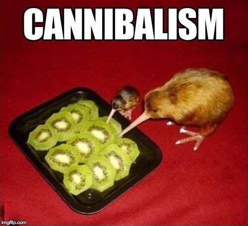 #KiwiBirds eating #KiwiFruit = #Cannibalism #LetsGetWordy #Kiwi