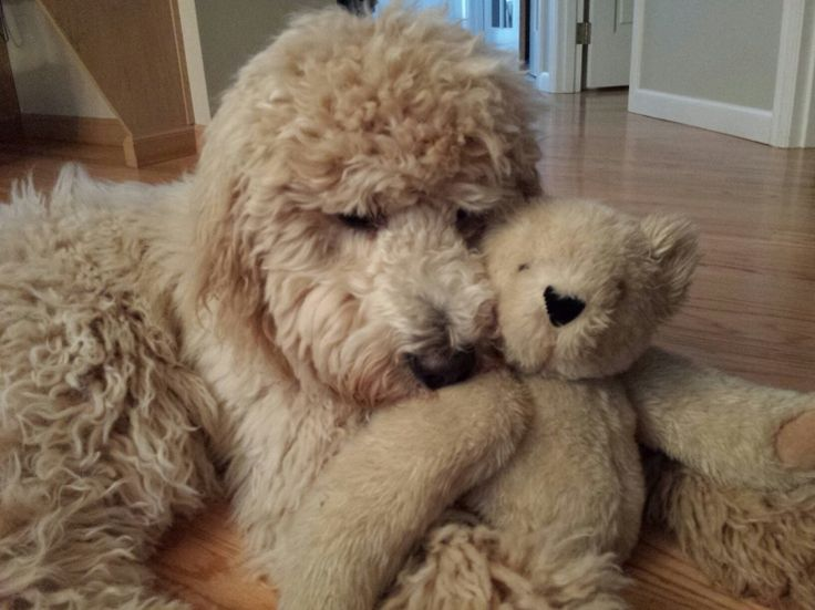 Milo and his bear 7mths old
