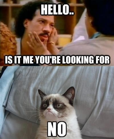 Angry Cat... Not looking for Lionel Richie
