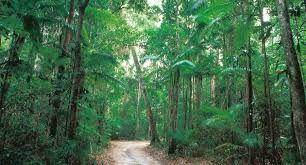 Image result for fraser island rainforest