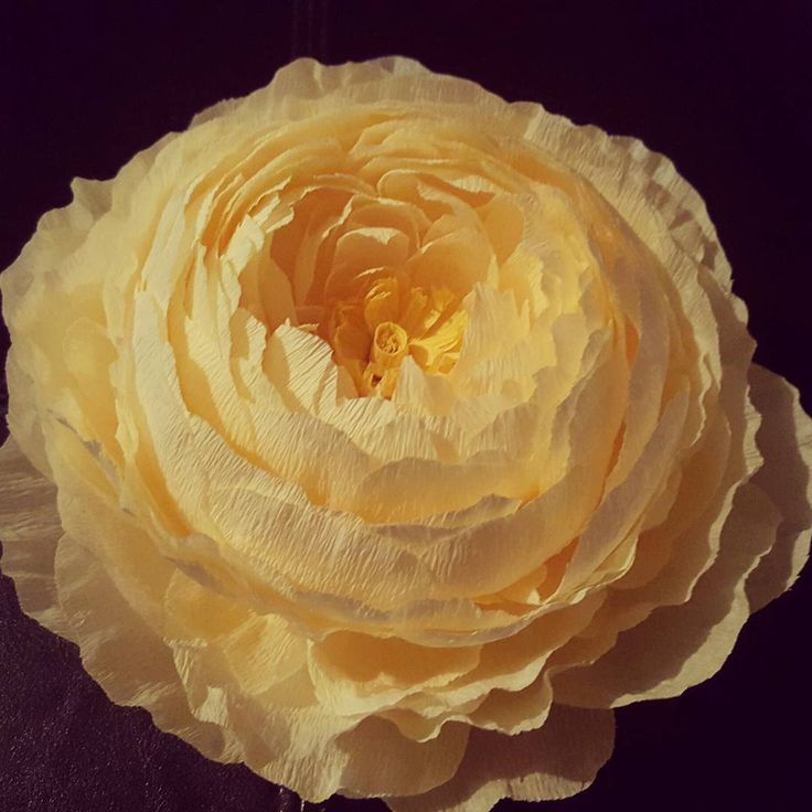 "Crepe paper flower.  Crepe paper peony   ""#crepepaperflowers #crepepaperpeony #crepepaper #diypaperflowers #paperflowers"""
