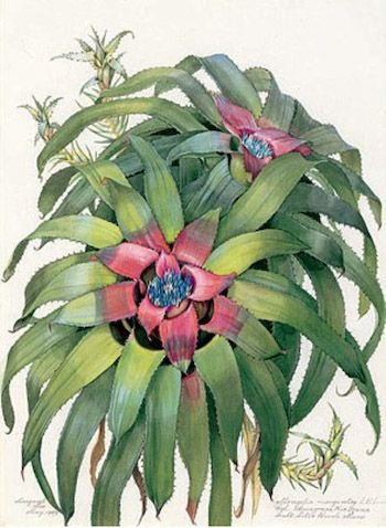 Art Needlepoint Maria Sibylla Merian was a fine painter and superb naturalist, one of the first woman scientists we know of. Her observations of insects and their relationships with plants revolutionized botany and zoology. From the Art Needlepoint Company. $84.00