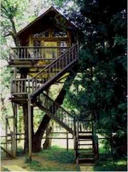 Treehouse motel and treehouse-building school