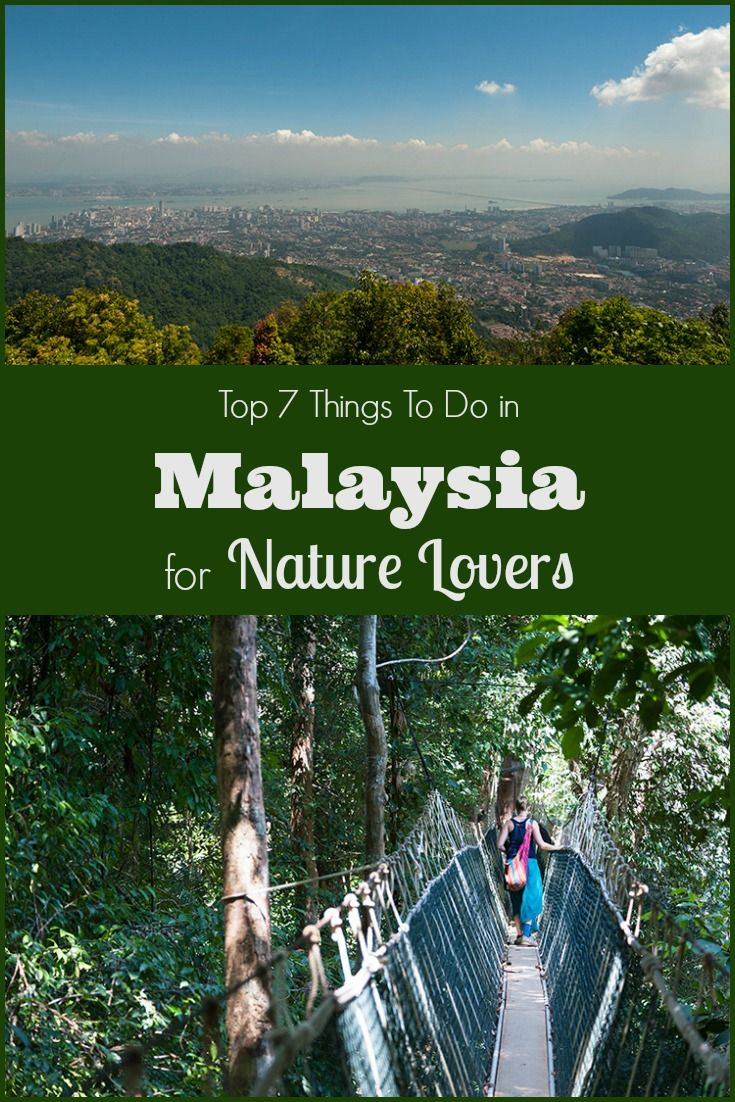 Top 7 Things to Do in Malaysia for Nature Lovers, including visiting Orangutan Sanctuaries, diving Pulau Sipadan, hiking Taman Negara National Park & more.