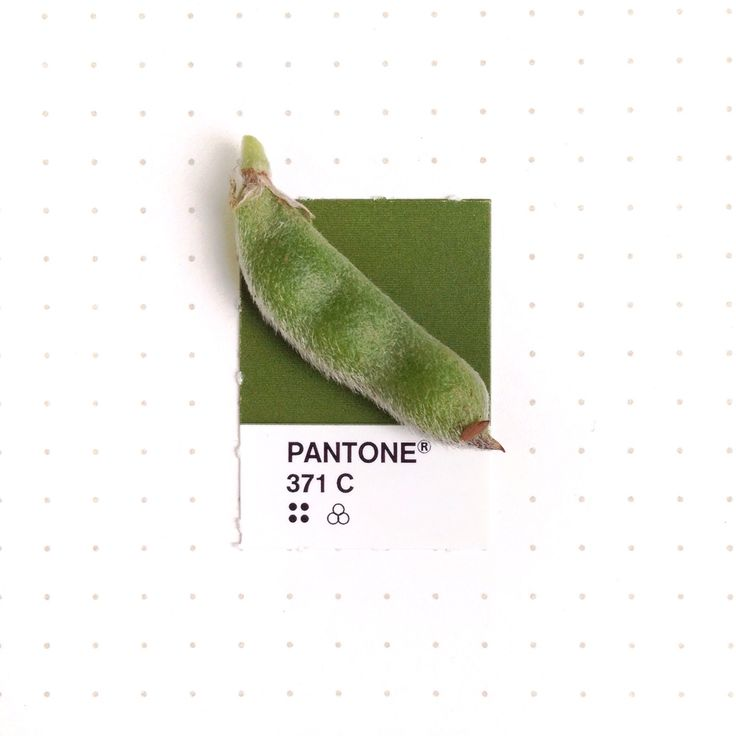 Pantone 371 color match. The fuzzy seed pod of Texas Bluebonnet. All that fuzz means they're in the pea family.