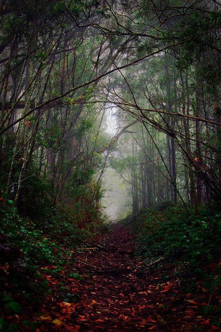Dark Forest, Australia