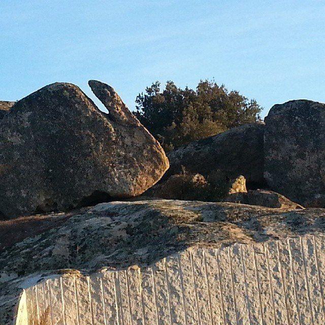 """Roccia """"Il coniglio"""" - Monte Ladu - Buddusò - Sardegna Centrale -"""