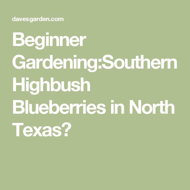 Beginner Gardening Southern Highbush Blueberries In North Texas