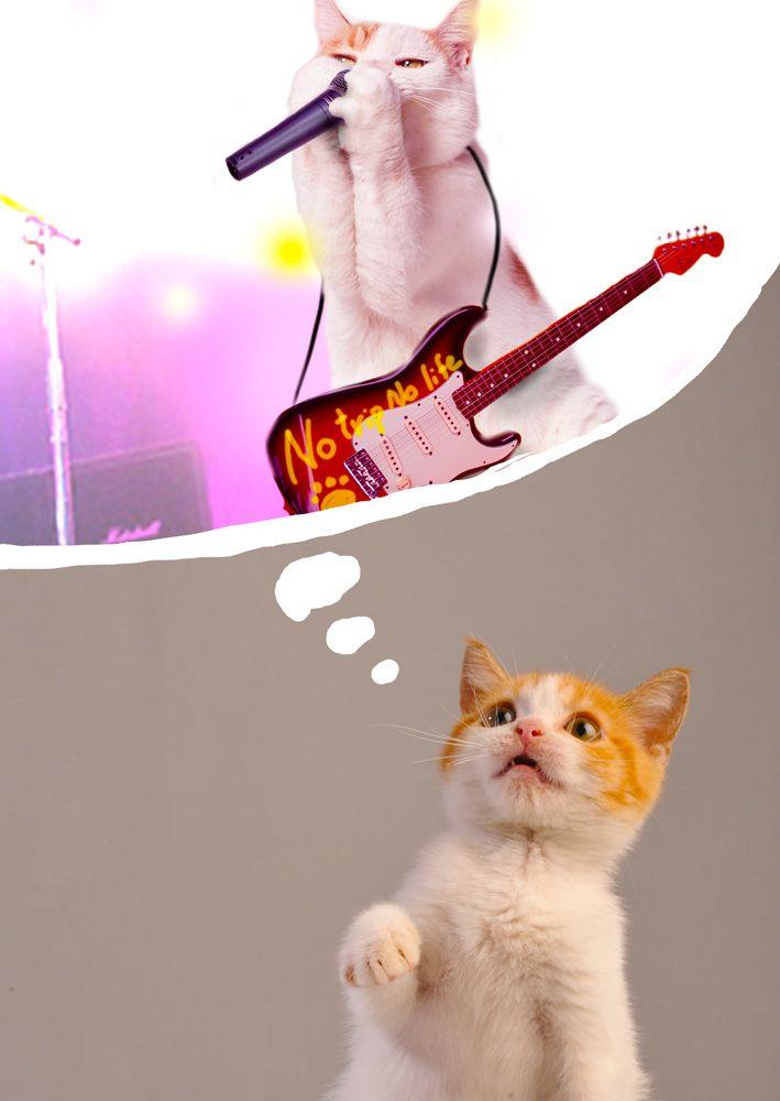 rock star kitty: Kitty Cats, Animals, ️Cats ️, Dream, Funny Cats, Black Cats, Special Cats 2, Cats 3 0, Domestic Cats