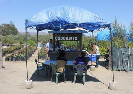 2014 Summer Dining Guide to the Valle de Guadalupe's Campestres, Stands and Restaurants