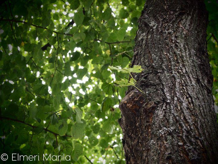 Beatiful green tree