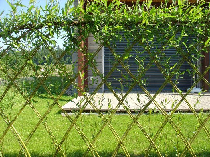 am nat saule vivant construire avec du vivant jardin pinterest recherche. Black Bedroom Furniture Sets. Home Design Ideas