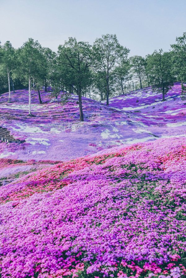 12 Beautiful Places That Belong on your Japan Bucket List