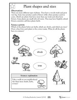 1st grade 2nd grade kindergarten science worksheets. Black Bedroom Furniture Sets. Home Design Ideas