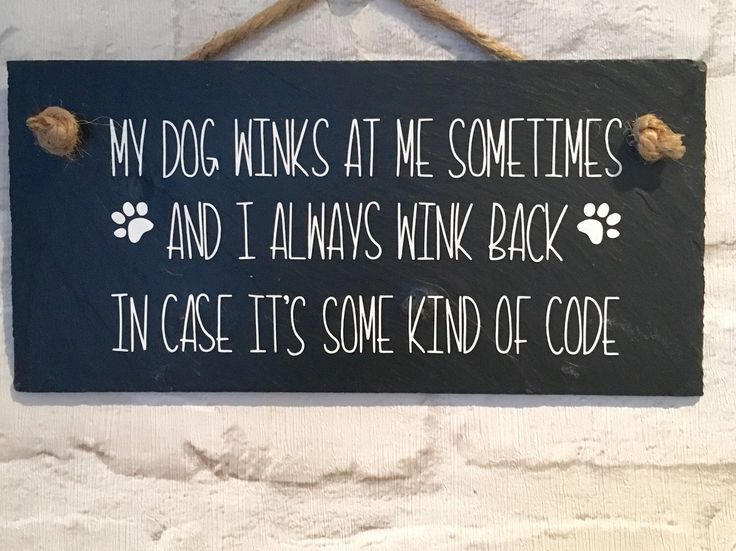 Funny Dog Quote Sign Slate Humerous Plaque Family Lover Gift Signs