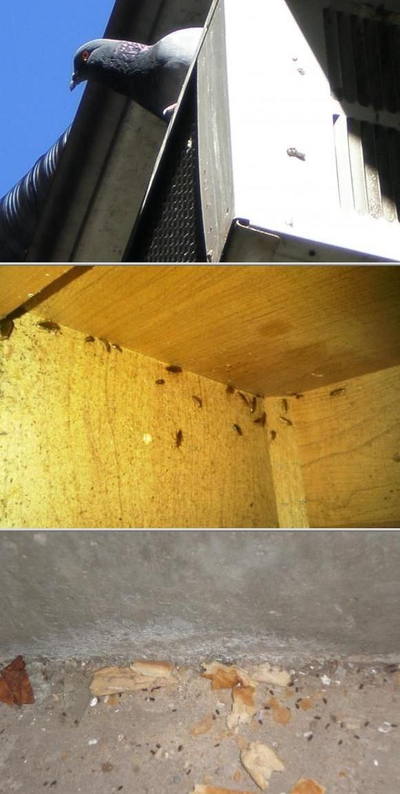 If you need bed bugs removal, hire Fillmore Termite Pest Control. In addition to bed bugs control, their bed bugs exterminators help control termites, ants, roaches, fleas, bees, wasps, and others. Visit thumbtack.com to get a quick quote for this bed bug exterminator.