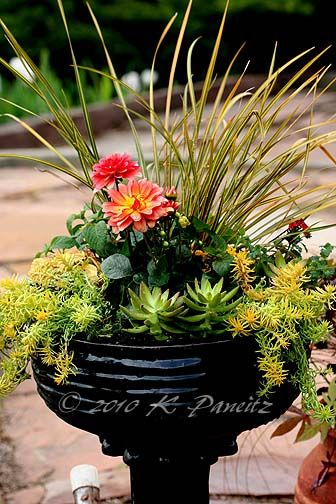 for container: Sword-like leaves of libertia give a pop of gold and thrive in containers.