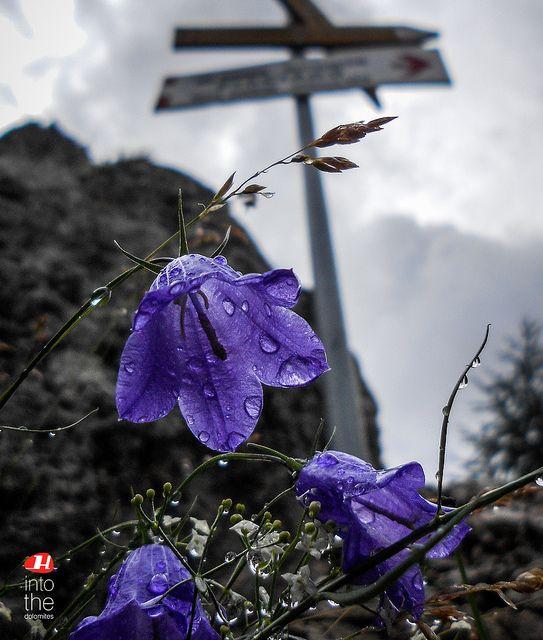 Dolomites nature   Flickr – Condivisione di foto!