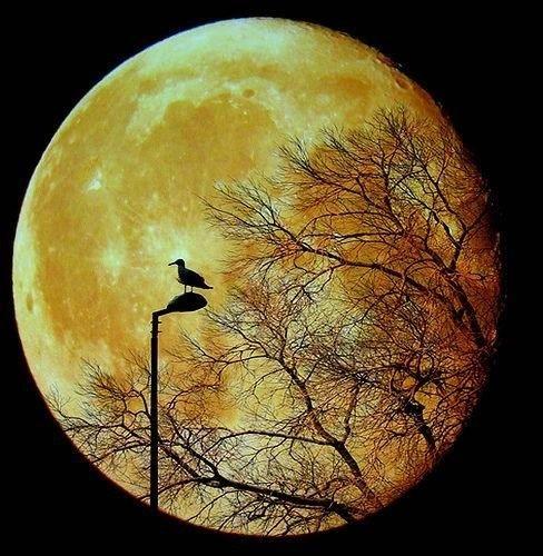 De maan staat voor WEDERGEBOORTE. De maan heeft een hele grote invloed op al het water op aarde. Hij regelt namelijk eb en vloed , de neerslag, de voortplanting van honderden zeedieren, de kieming van zaden. De maan wordt meestal  met de vrouwelijke vorm aangesproken. Dit omdat de menstruatie van de vrouw oorspronkelijk dezelfde cyclus heeft als de maancyclus.