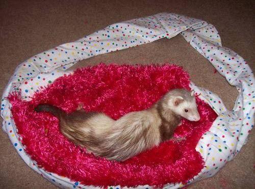 DIY Ferret Sling Carrier - petdiys.com