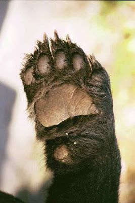 Desertmountainbears Notes: Adding Claws to the Bear