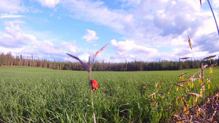 The pasture of a property for sale in BC Canada. See more pics of its lush landscapes and country house via the link. #propertyforsale #landforsale  #countryliving