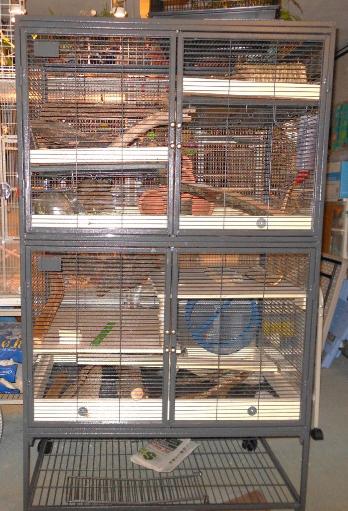 Paradise in a Critter Nation | Degu and Chinchilla World