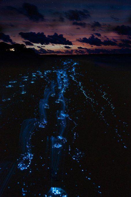 El mar de estrellas en la isla Vaadhoo en Maldivas.