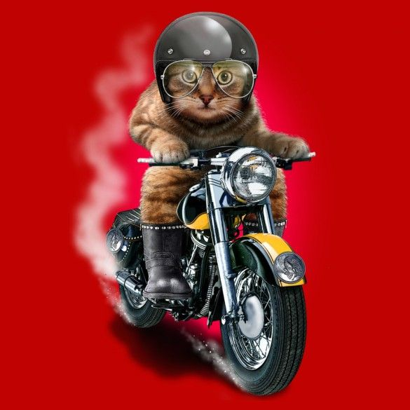 Daily Tee: Hell Rider custom t-shirt