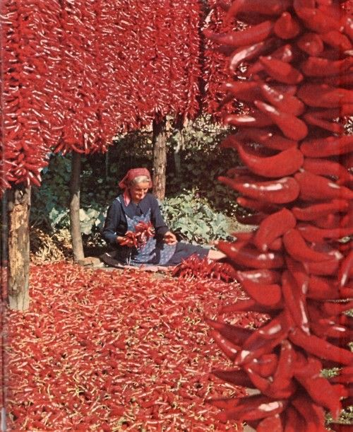 Red pepper drying in Hungary from The Cooking of Vienna's Empire, 1968