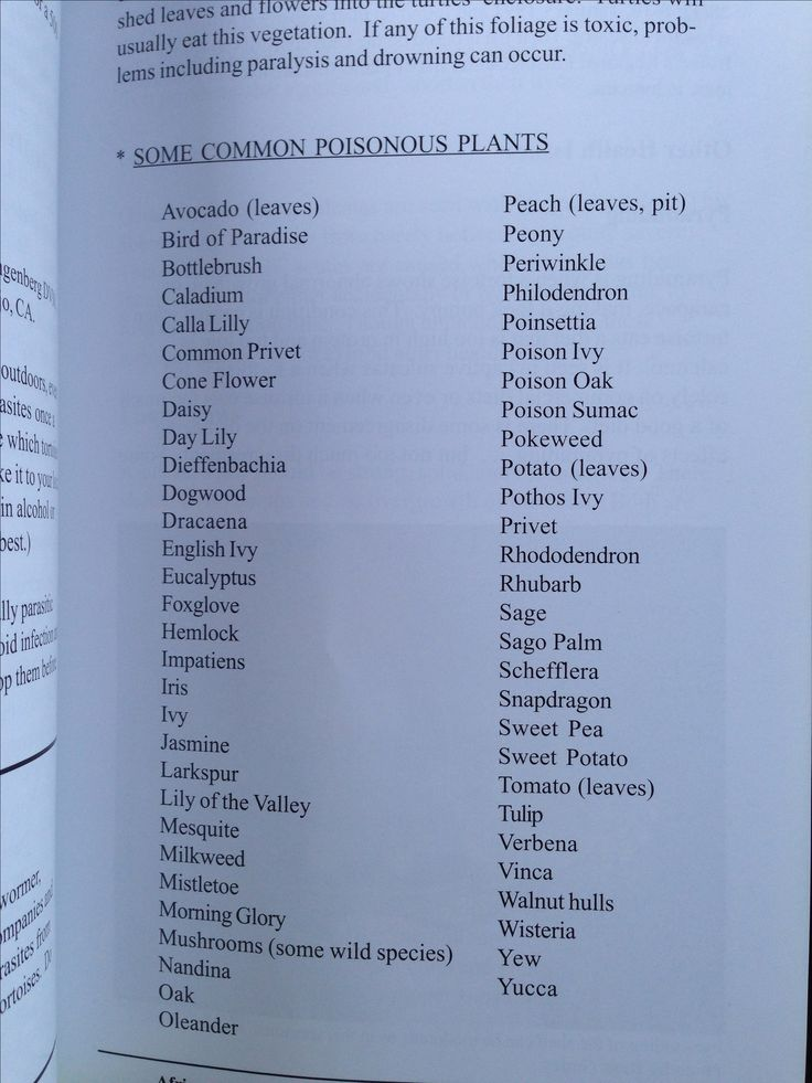 Sulcata Food List