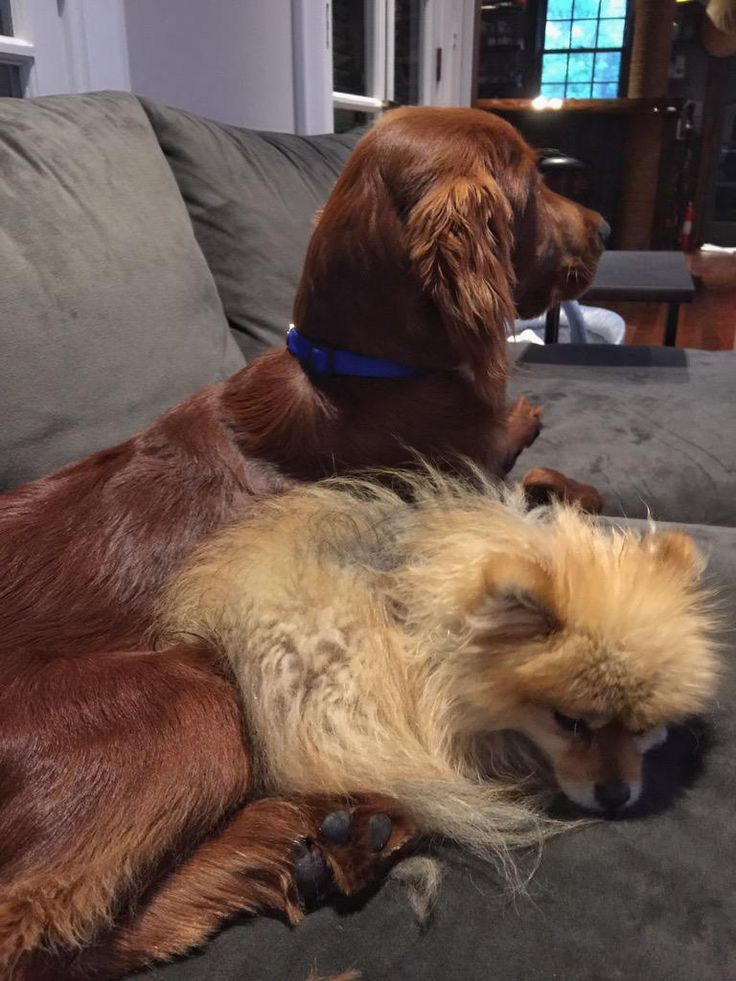 Puppy brothers via @Amy_Reimann