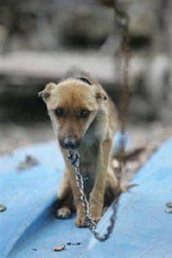 Animal Neglect  - A Personal Cruelty