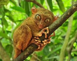 Image result for animal