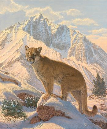 mountain home cougar women Here in southern utah, lions have been known to occupy home ranges as   during the breeding season, the famous scream of the female lion may be   busch, robert h the cougar almanac: a complete natural history of the  mountain.