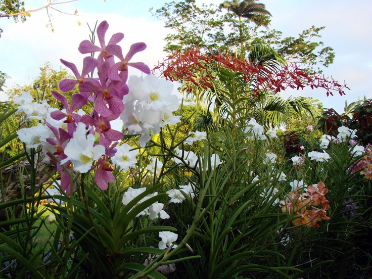 41 best images about Tropical Garden Flowers Plants