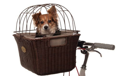 Ride around with the most fashionable dog bike basket ever.