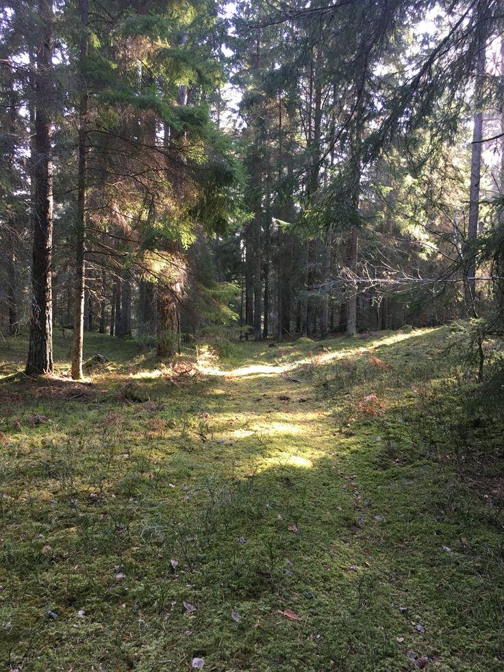 #Häringeslott #Mikaela/Oppella