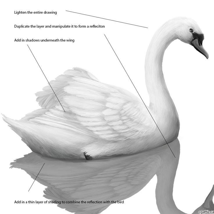 Aninimal Book: 25+ trendiga Swan drawing-idéer på Pinterest   Rita människor