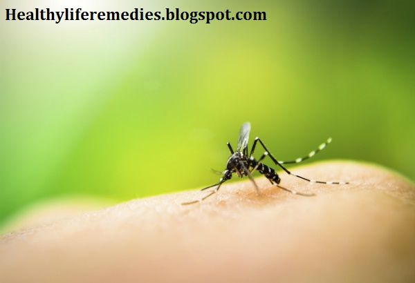 insect bites treatment, home Remedies, insect bites treatment home remedies, insect bites treatment for baby, insect bites treatment itching, insect bites treatment natural, insect bites pictures, treatment for insect bites swelling, how to prevent mosquito bites naturally, Mosquito Repellents That Best Protect Against Zika, Insect Bites and Stings and Spider Bites-Prevention, What's The Best Way To Keep Mosquitoes From Biting, Desperate to avoid mosquito bites, Insect bites and stings, Stop…